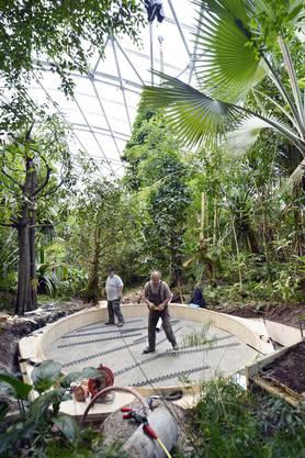 Zum Jubiläum des 10-jährigen Bestehens der Halle soll der Baumkronenweg vor Ostern 2013 eroeffnet werden.