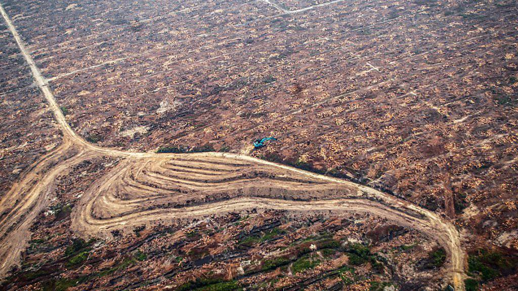 Der Bundesrat soll den Handel von Produkten verbieten können, wenn deren An- oder Abbau oder die Herstellung die Natur erheblich gefährdet. Das trifft etwa auf Palmöl zu. Für dessen Plantagen werden zig Kilometer natürlichen Waldes gerodet. (Archivbild)