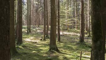 Spaziergänge im Wald sind in Zukunft vielleicht nicht mehr kostenlos. (Archiv)