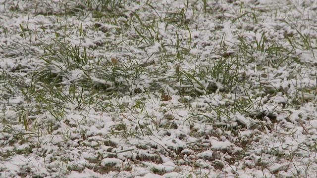 Schweizer Skigebiete leiden unter Schneemangel