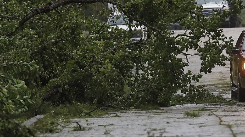 """Von """"Barry"""" gefällt: Ein Fahrer muss einem Baum auf der Fahrbahn ausweichen."""