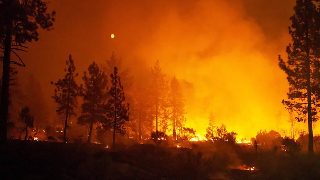 Sechs Tote und 63'000 Hektar vernichteter Wald