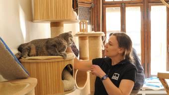 Katzenheim zieht nach Muttenz