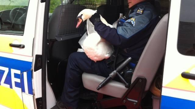 Ein Schwan hatte sich auf die Fahrbahn der Schwarzwaldbrücke verirrt und musste von der Polizei gerettet werden.