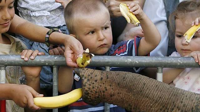 Fütterung der Dickhäuter in Bern