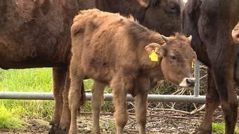 Der Tierschutzfall Boningen hat am Dienstag im Solothurner Kantonsparlament einmal mehr zu reden gegeben. (Archiv)