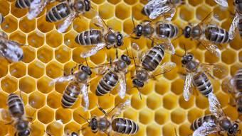 Die Bienen an ihrer Arbeit