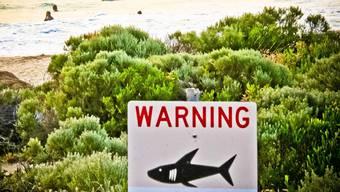"""ARCHIV - Ein Schild mit der Aufschrift """"Warning shark sighting"""" (dt. Achtung Hai gesichtet) ist in der Nähe von Prevelly Beach aufgestellt. Foto: Rebecca Le May/AAP/dpa"""