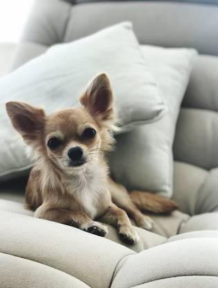 Chihuahua, ...
