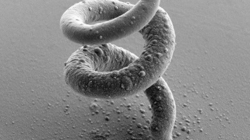 Das Mikroskopiebild zeigt eine mit dem neuen Verfahren in einem einzigen Arbeitsschritt gedruckt Spirale aus Kupfer. Sie ist mit rund 25 Mikrometern halb so breit wie ein menschliches Haar.