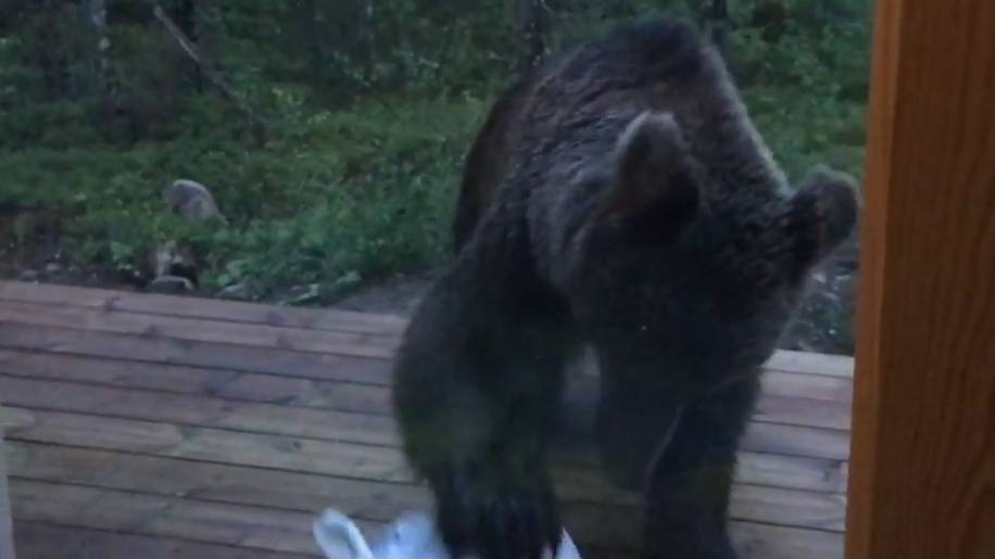 Als wäre es Nachbars Büsi – so furchtlos verjagen Finnen einen Bären