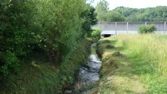Die Hecke entlang des Krebsbaches in Hendschiken ist idealer Brutplatz.
