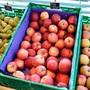 Bei der Apfelernte ist die Sorte Gala auch dieses Jahr die Spitzenreiterin.
