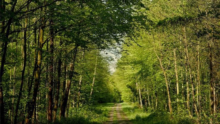 Bleibt ein Wald: Das Wäberhölzli.