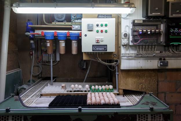 Rundgang durch den Bruteier-Produktionsbetrieb von Walter Eberhard in Biezwil