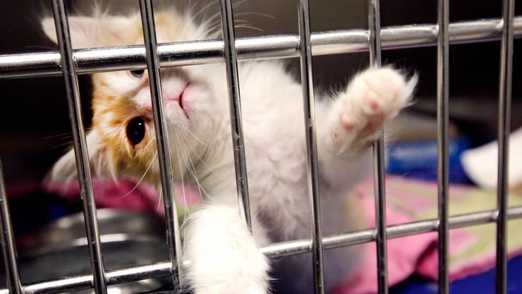Aus Angst, dass das Haustier Krankheitsträger ist, landen derzeit viele Tiere im Tierheim.