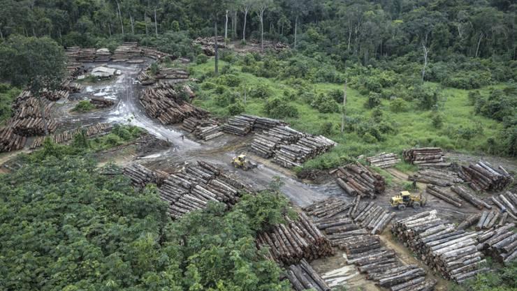 Die Abholzung des Regenwaldes in Brasilien nimmt immer rasanter zu. Im Archiv-Bild eine illegal gerodete Fläche.