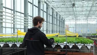 «Ich fühle mich, als wäre diese Anlage mein Baby»: Der urbane Bauer Paul Jeannet hegt seinen Salat im Gewächshaus mitten in Den Haag.