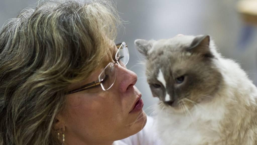 An einem Symposium berichteten Veterinärinnen, ein Fünftel bis die Hälfte der Haustiere, die mit Corona-Infizierten zusammenleben, stecken sich an. Da Stubentiger und Konsorten kaum Symptome entwickeln, wird das erst gefährlich, wenn es zu Rückübertragungen auf Menschen kommt (Archivbild).