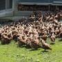 85 Prozent der Eier stammen in der Schweiz aus Freiland- oder Bioproduktion.