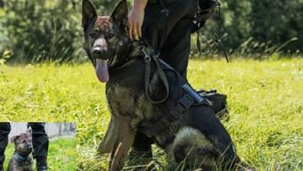 """Dank der ausgezeichneten Spürnase des Deutschen Schäferhundes """"Snatch"""" hat die Polizei im Kanton Waadt zwei Einbrecher verhaftet."""