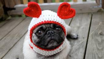 US-Amerikaner beschenken am Valentinstag auch gerne ihre Haustiere.