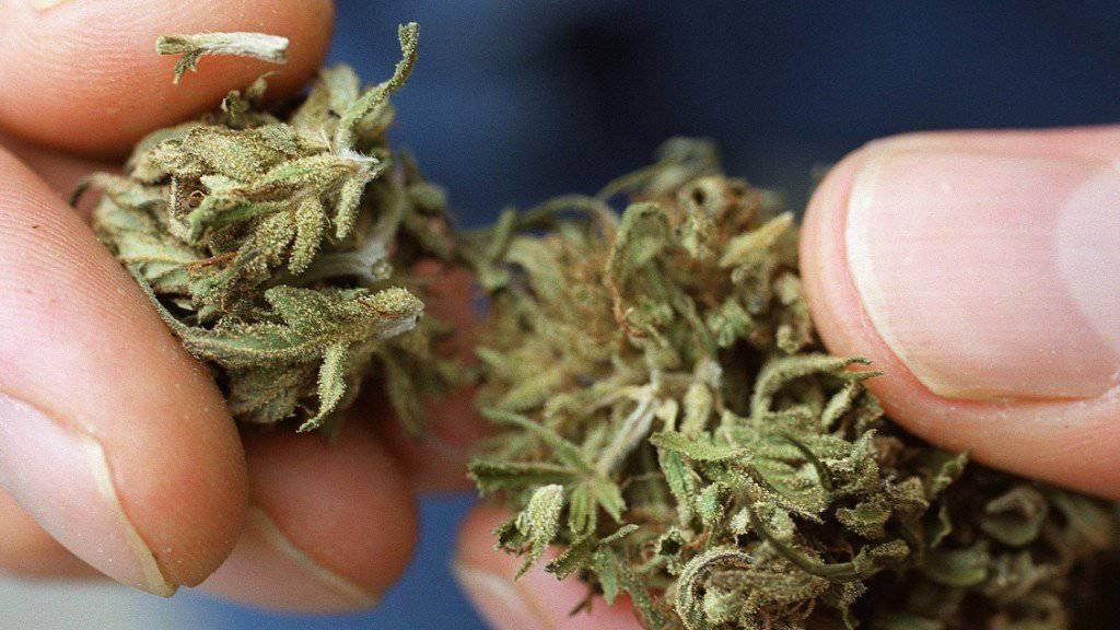 Grünes für Grossräte: Ein Tessiner Aktivist warb am Montag für die Cannabis-Legalisierung, in dem er solches an die Volksvertreter verteilte. (Themenbild)