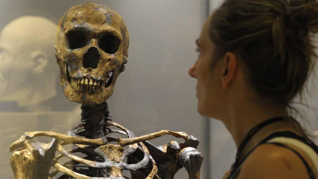 Nicht nur der moderne Mensch trägt ein bisschen Neandertaler in seinem Erbgut. Forscher haben herausgefunden, dass auch das Gegenteil der Fall war. (Archiv)
