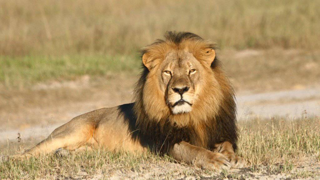 Die Grüne Nationalrätin Aline Trede setzt sich gegen die Jagd bedrohter Tierarten ein.