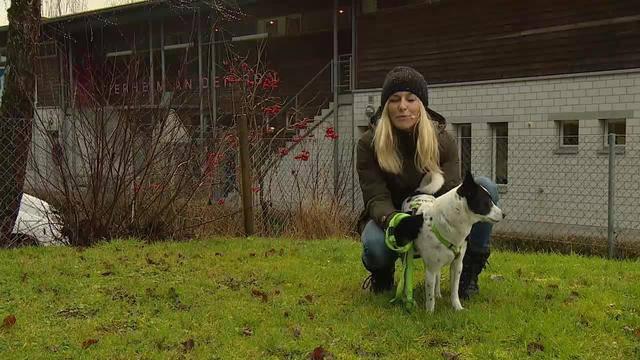 Aus dem Tierheim an der Ron des Tierschutzvereins Luzern in Root