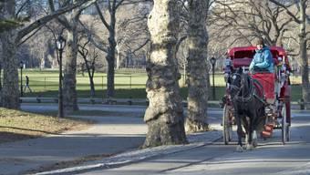 Eine Pferdekutsche am 13. Januar unterwegs im Central Park in New York.
