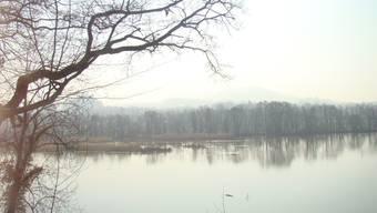 Eine Wasserleiche wurde aus dem Altrhein bei Efringen-Kirchen geborgen. (Archivbild)
