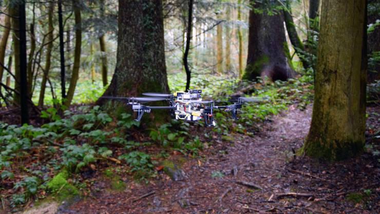 Mit zwei Kameras und einem lernenden Algorithmus ausgestattet, können Drohnen Waldwege erkennen und ihnen folgen.