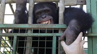 """Tierschützer kümmern sich um """"Omega"""""""