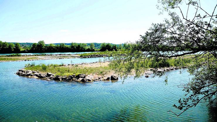 Ökologischer Nutzen: Noch ist die Vegetation nocht allzu üppig, doch bald soll hier ein Auenwald entstehen.