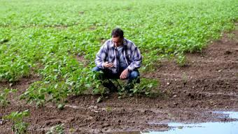 Viele Kartoffeln verfaulen, bevor sie wachsen können: Bauer Christoph Hagenbuch auf seinem Feld in Oberlunkhofen.
