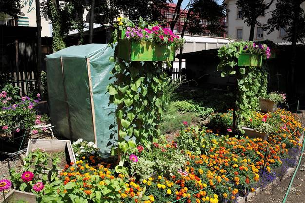 Gemüse und Gewürze pflanzt Köbi «in Absprache mit der Küchenchefin».