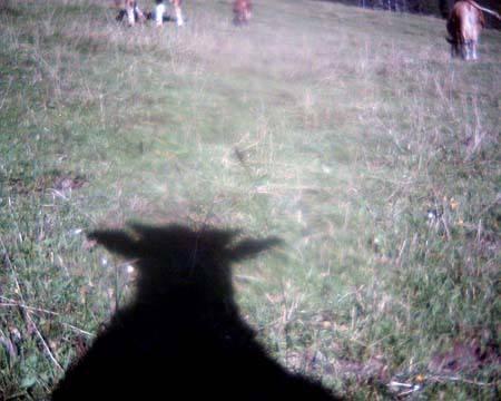 Hier eine andere Art von Selfie: Selbstporträt von Uschi auf Zaggisboden, Jaunpass.