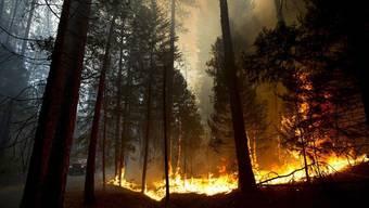Waldbrände greifen auf Yosemite-Park über.