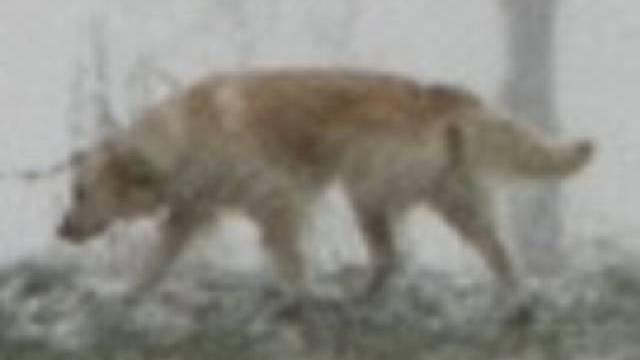 Hund taucht überraschen auf (Symbolbild)