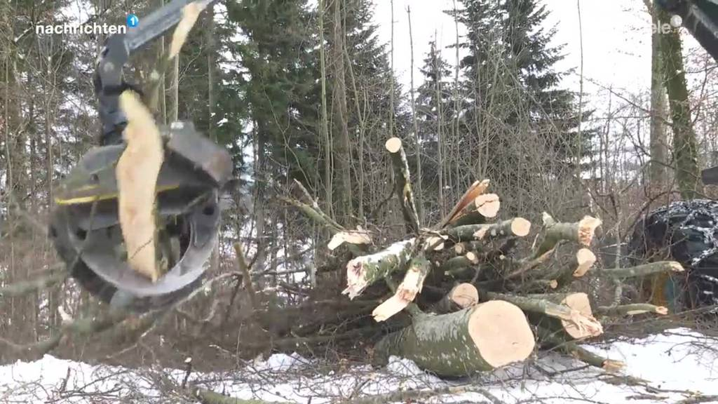 Tausende Kubikmeter Holz werden präventiv geräumt