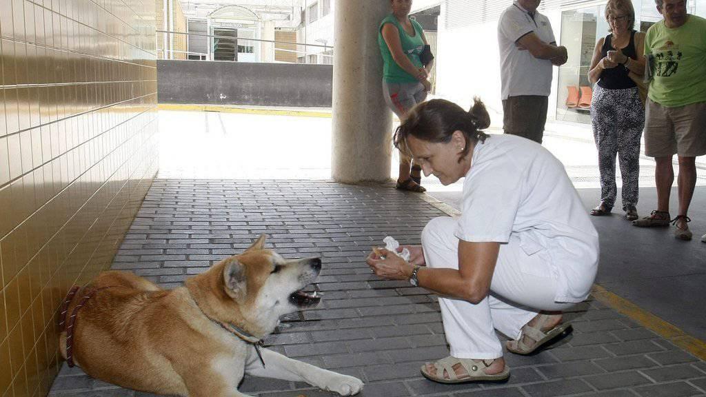Die treue Hündin Maya wird von einer Krankenpflegerin versorgt, während sie vor dem Spital auf ihr Frauchen wartet.
