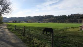 Auf dem Gebiet Hegmatte in Schöftland sollen neue Betriebsgebäude für die WSB entstehen.