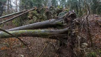 Sturmschäden im Wald. Verenaschlucht und Lüsslingen Nennigkofen