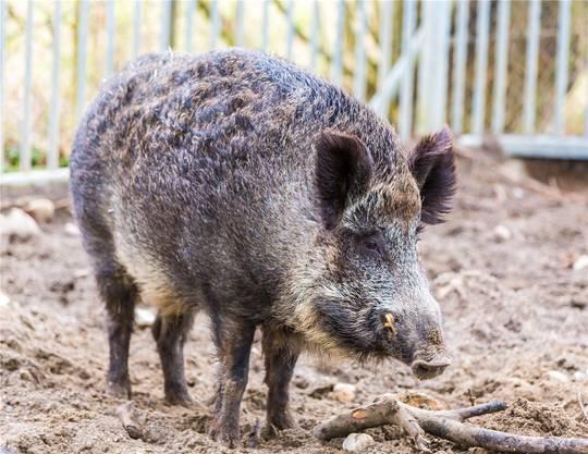 Tiere aller Art gehören zu den Gästen auf dem Hof – sogar ein Wildschwein.