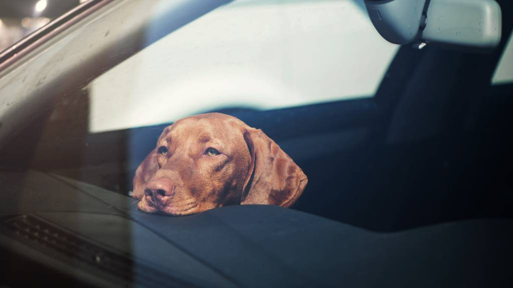 Überhitztes Auto: Im Notfall die Scheibe einschlagen