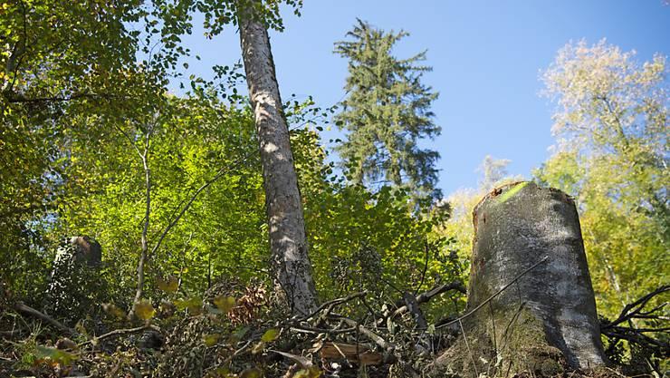 In der Schweiz gehört der Wald fast 250'000 Eigentümerinnen und Eigentümern, wie eine Analyse des Bundesamtes für Umwelt zeigt.