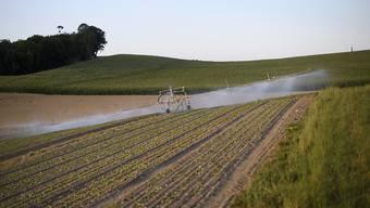 Bei einem Ja zur Trinkwasserinitiative sei nicht auszuschliessen, dass Bauern auf Direktzahlungen vom Bund verzichten und ihre Produktion intensivieren würden, warnt der Bauernverband auf Grund einer Fallstudie. (Themenbild)