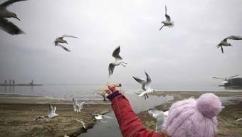 Vögel füttern soll im Baselbiet verboten werden