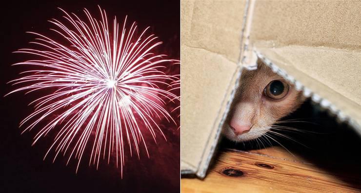 Tiere haben Angst vor dem 1.August-Feuerwerk